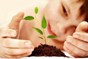 Siembra-de-plantas-semillas-y-arbol