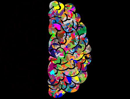 Cerebro, Mente, A, Me, Ai, Anatomía